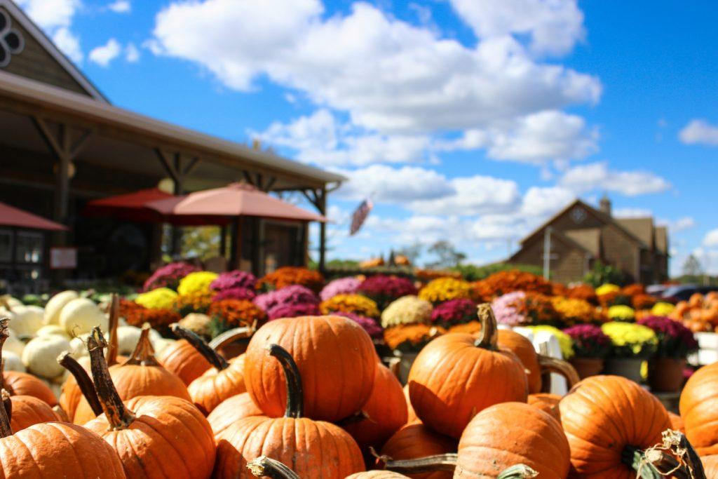 Pumpkins at an Owensboro Farm