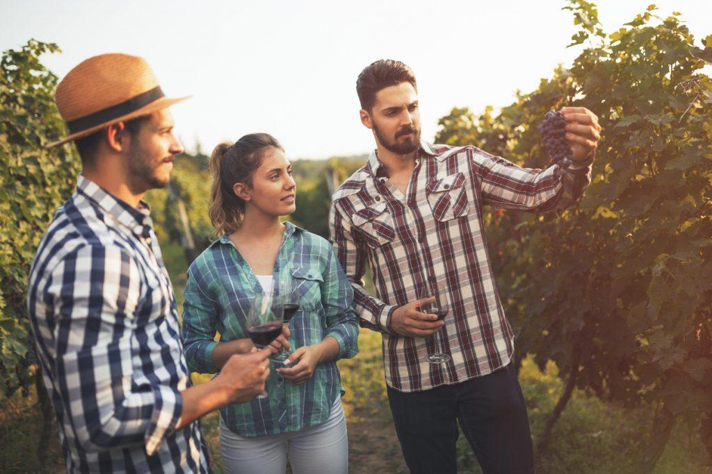 Misty Meadows Winery