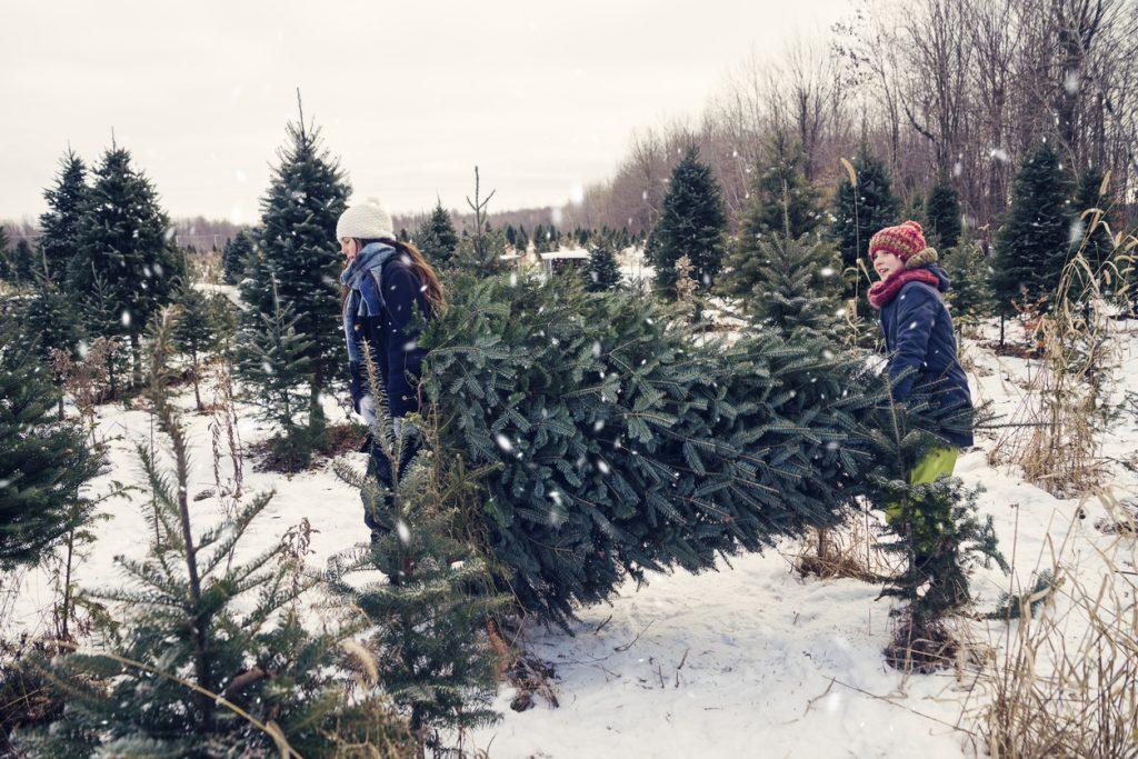 Kentucky tree farms